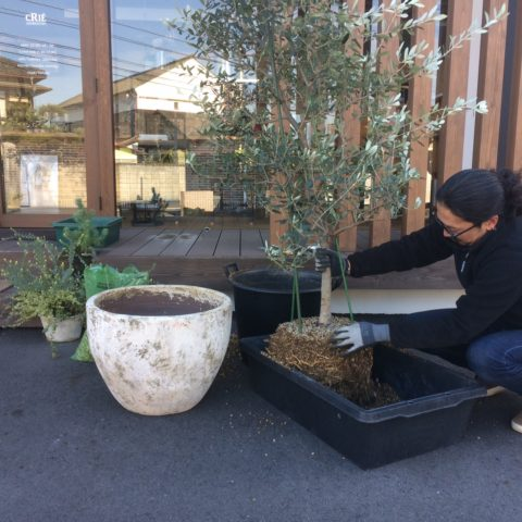 屋外の植栽をバージョンアップ!
